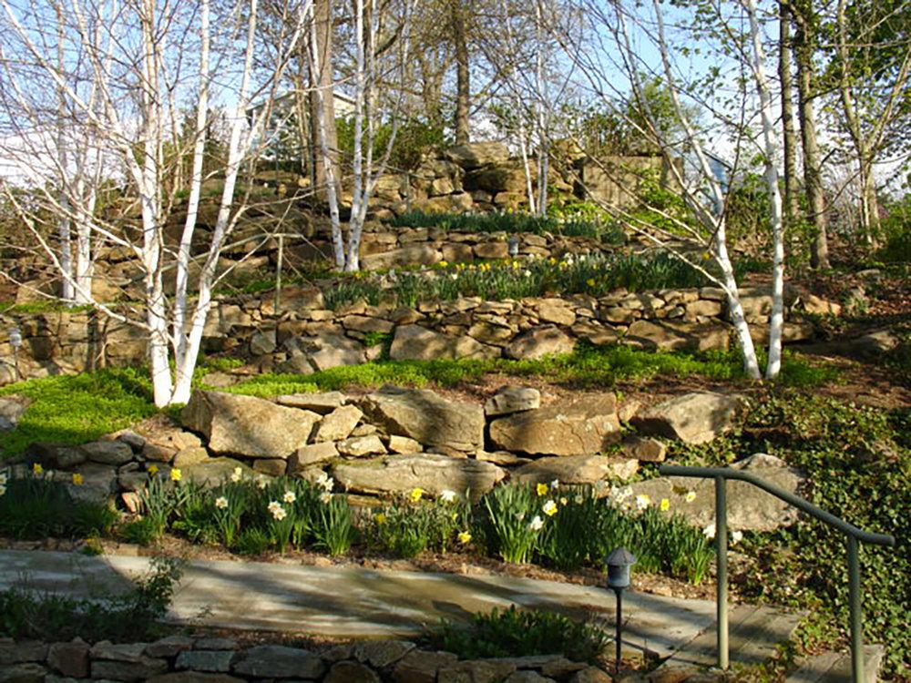 garden-02 (the woodland garden in Spring).JPG