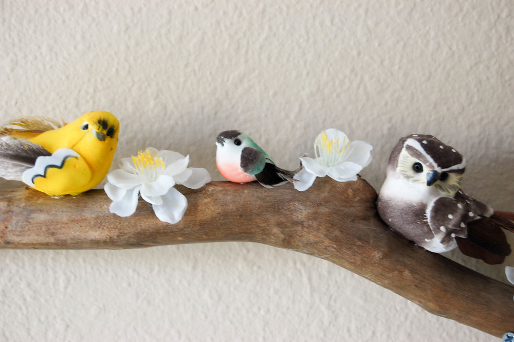 bird branch close up