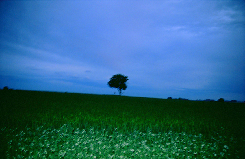 Nan Goldin,  The Lonely Tree , 2008.  Image Source