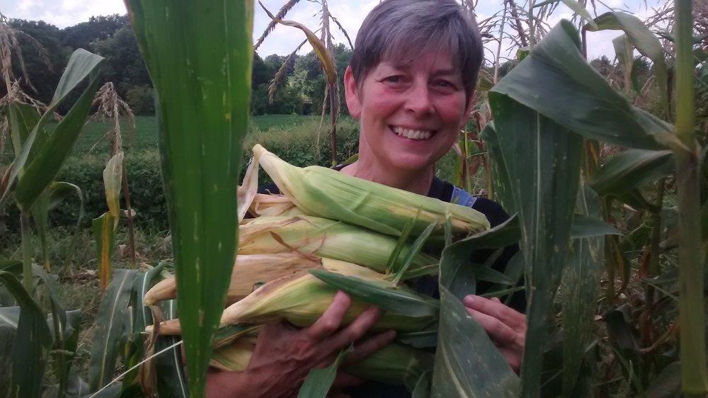 picking corn 7-24-15.jpg
