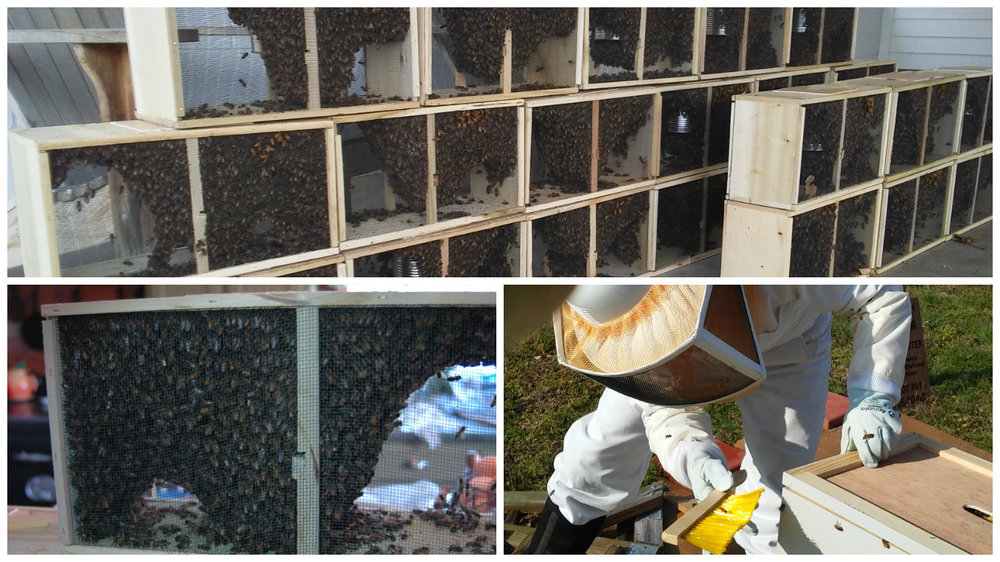 bee pick up and install.jpg