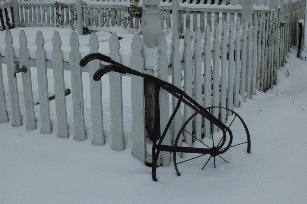winter 1-23-16 (15).JPG