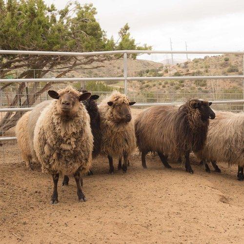 Katherine Tucker<br>Desert Churros Roving Ranch