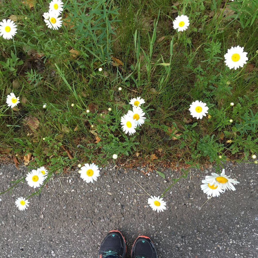 june_daisy