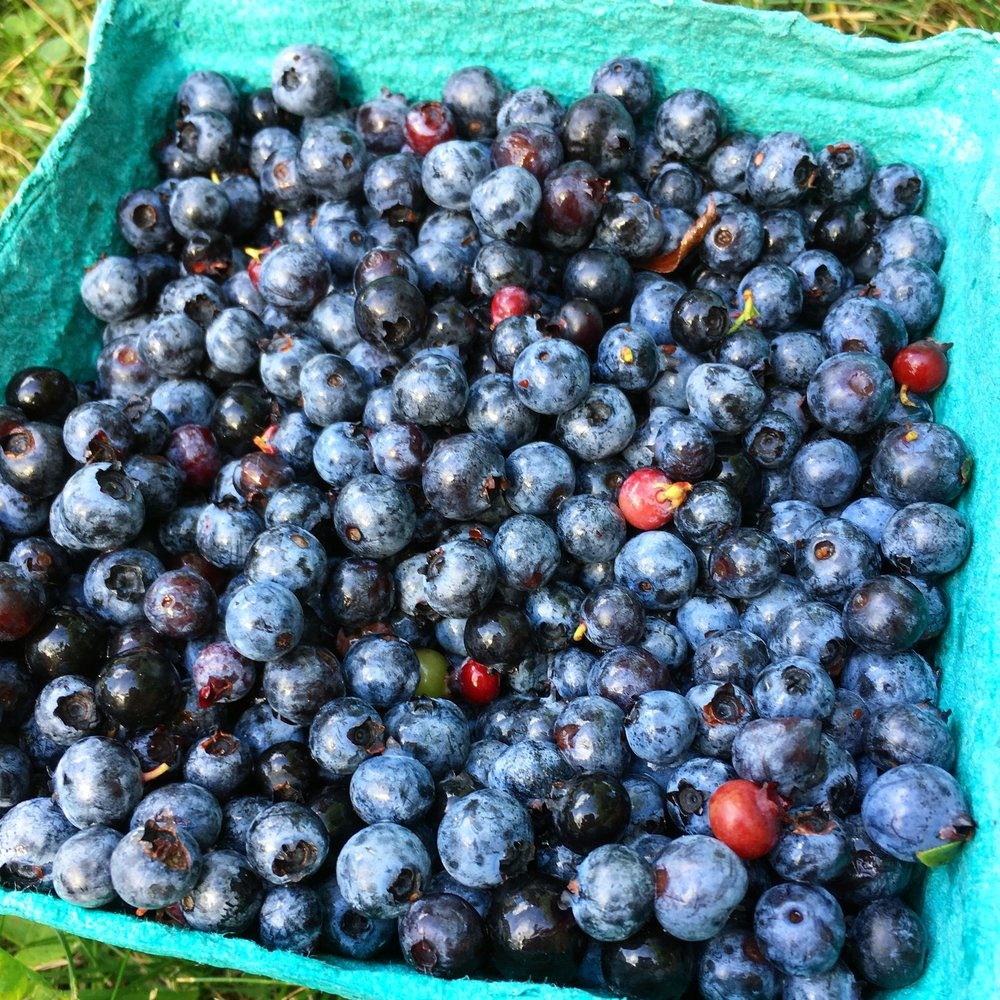Maine Blueberries: $3 for a large container in Maine, this would cost at least $14 in the Bahamas