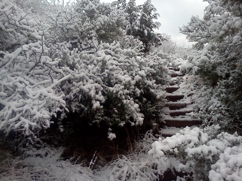 SnowStairsHorizontal.jpg