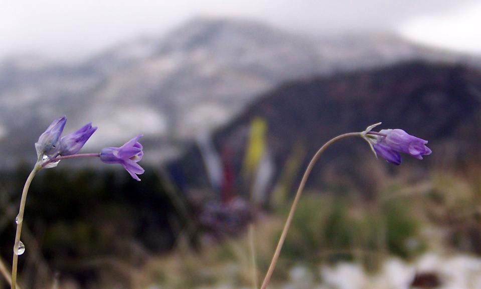 FlowersWaterdropsFlags_Max.jpg
