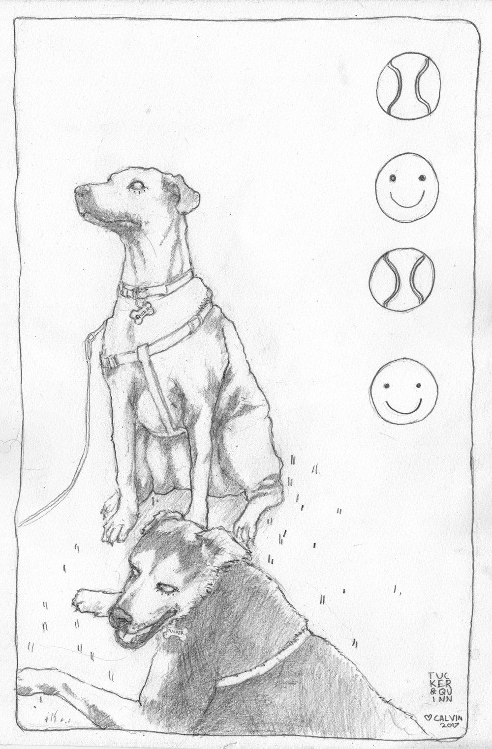 dogssmall.jpg