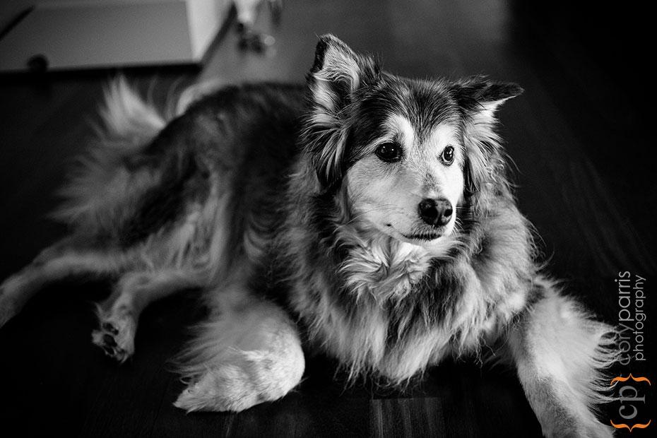 puppy portrait in seattle