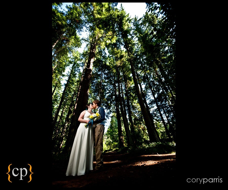 wedding couple in the trees by seattle wedding photographer cory parris