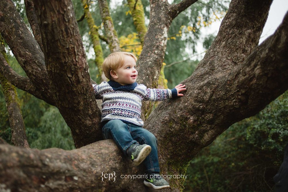 Little boy in a tree at Washington Park Arboretum