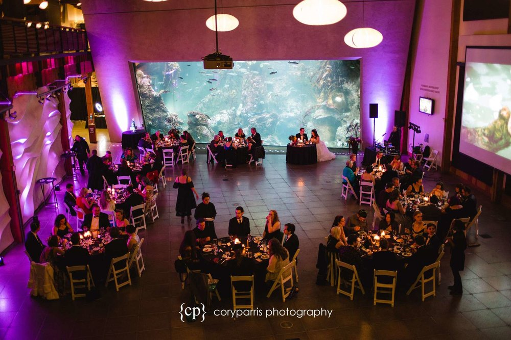 Wedding reception at the Seattle Aquarium