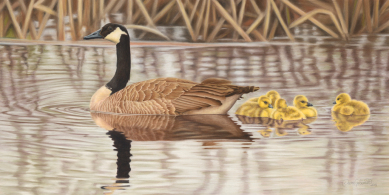 canada-geese[2].jpg