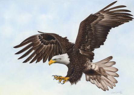 eagle[2].jpg
