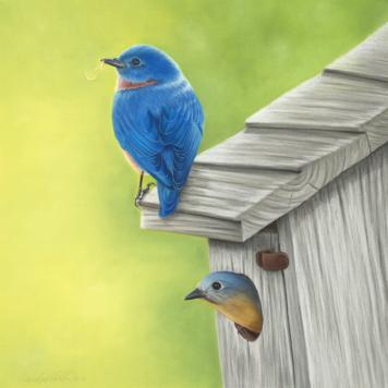 eastern-bluebirds[1].jpg