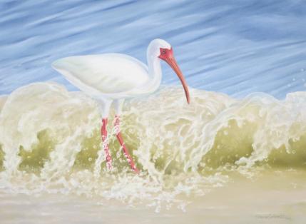 ibis[2].jpg