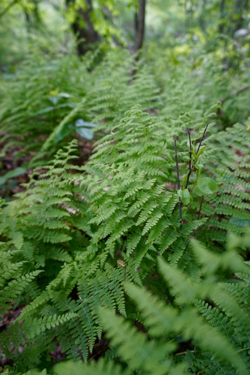 A patch of happy ferns.