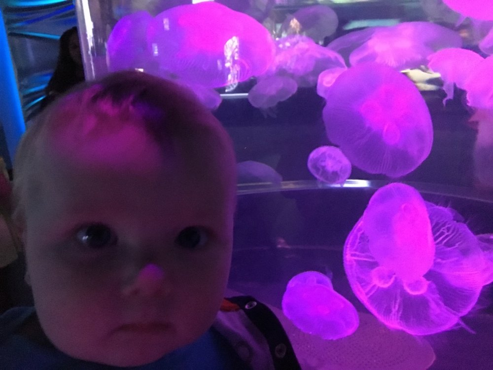 With the jellyfish