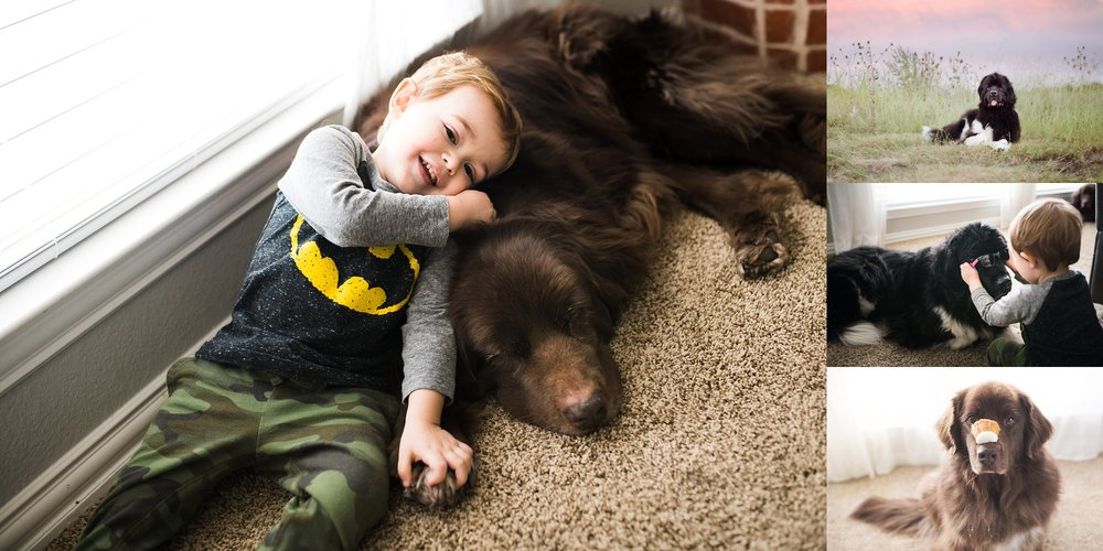 Two of my children are very hairy and drool a lot! - Newfoundland Dogs... the best!