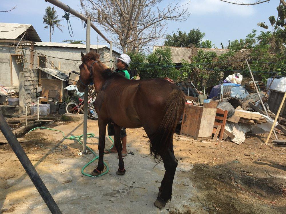 Gilli_ponies_0021.JPG