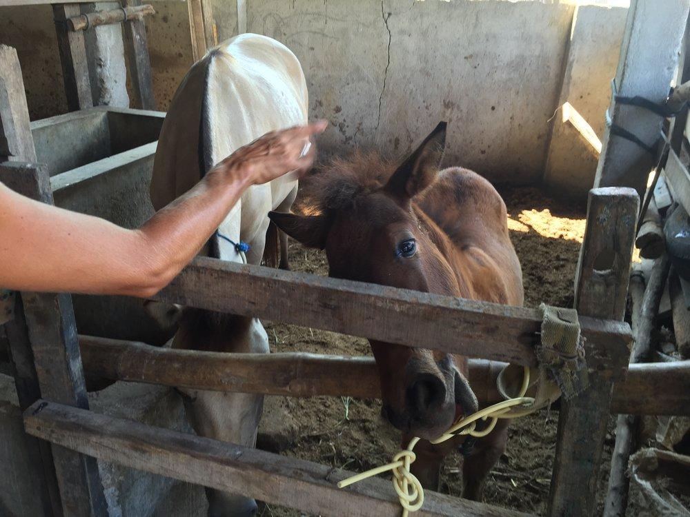 Gilli_ponies_0033.JPG
