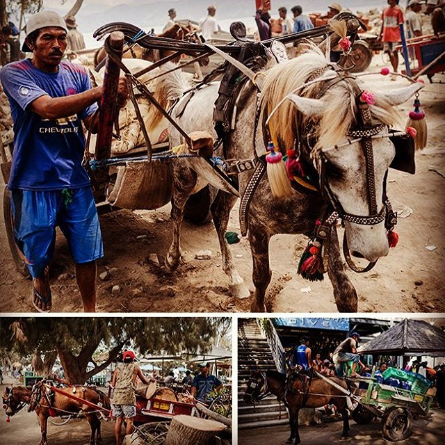 These carriage ponies are used to cart everything that comes on and off the Gili Islands. They work 8 – 10 hour shifts in stifling heat. During peak tourist season the garbage ponies alone cart around 20 tonnes of rubbish between 10-12 ponies every day. @lovehealanimals wants to make sure these ponies are getting the rest and respite that they so desperately need. Please join us on this journey to make their lives better 🙏🙏🙏 #LoveHealAnimals #GiliPonies #HealingGiliPonies #GiliPoniesSanctuary