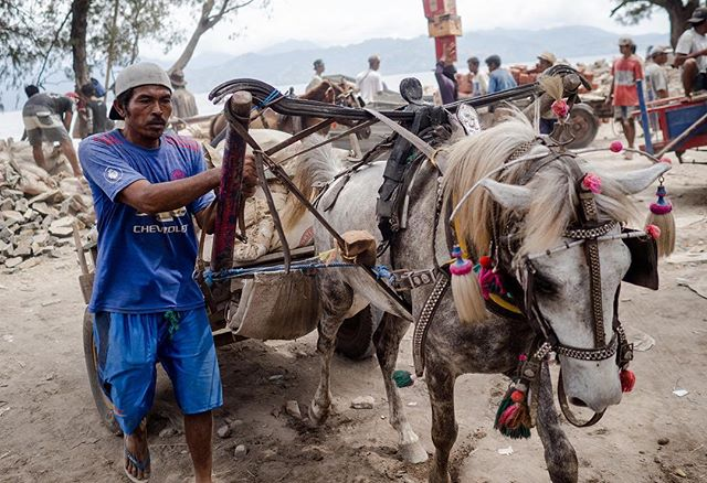 Working long shifts around the clock, 7 days a week in stifling and humid heat they cart tourists, luggage, rubbish and construction materials. During peak tourist season the garbage ponies cart around 20 tonnes of rubbish between 10-12 ponies every day. Join us on this journey to change their lives for the better 🙏🙏🙏 #LoveHealAnimals #GiliPonies #HealingGiliPonies #GiliPoniesSanctuary