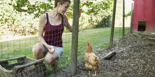 Rural Girl With Chicken and Eggs