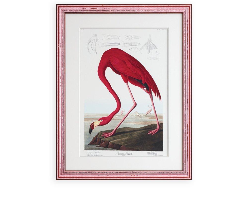 Flamingo_frame.jpg