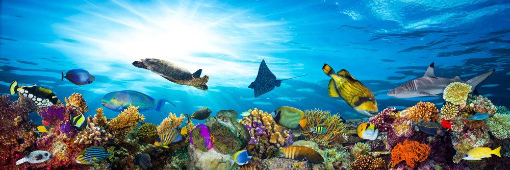 The Ocean -