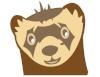 Ferret.News 2 -01.jpg