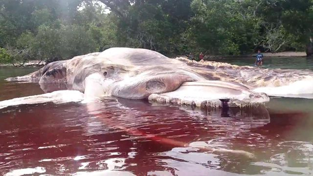 Enormous Sea Creature Found Decomposing On Indonesian Beach - See perspective on this story