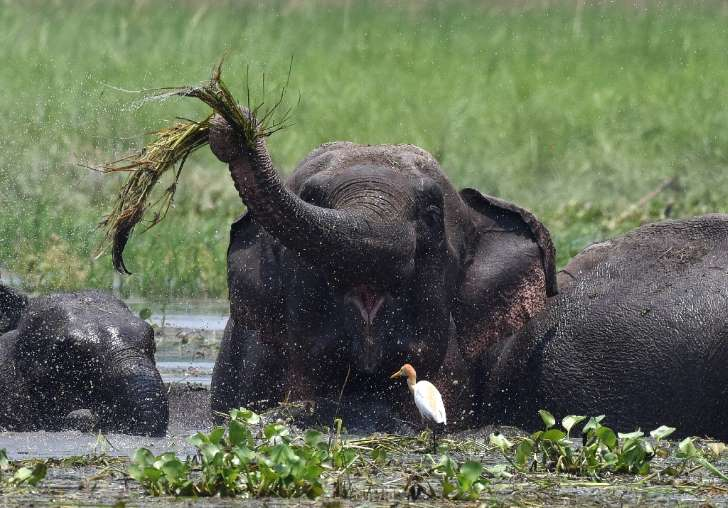 Rogue elephant tramples 15 to death in India, faces culling - See the prespectives on this story