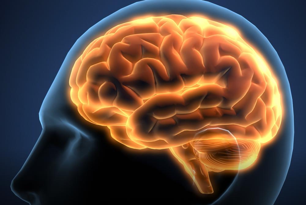 brain5.PNG