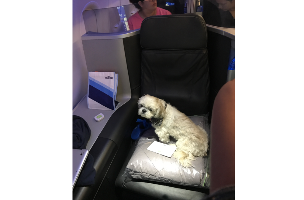 Ruby chillaxing on JetBlue's Mint class.