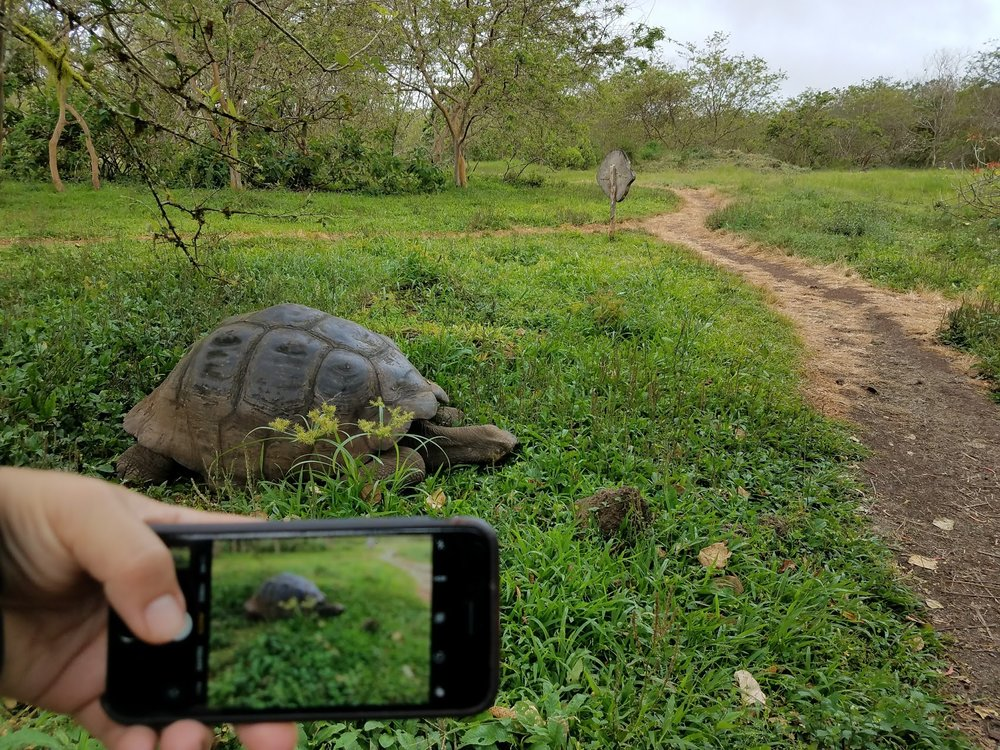 Don't expect to upload photos right on the spot in Galapagos... the WIFI/cell service is slow!