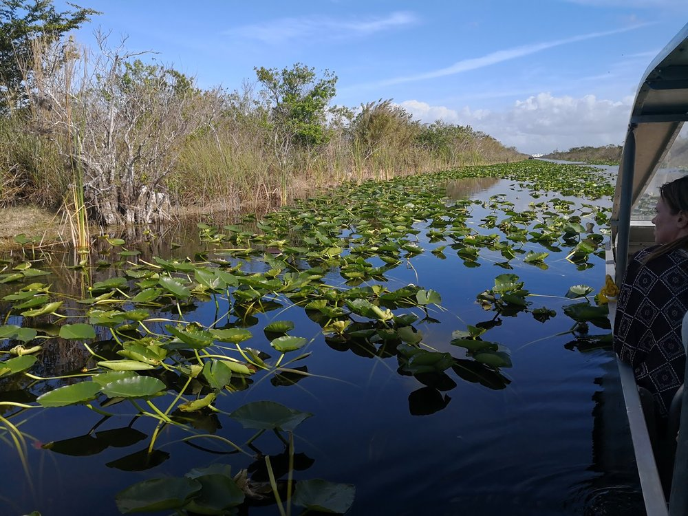 Airboat tour in Everglades.
