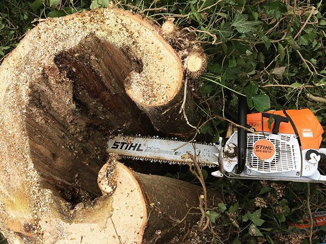 Took down this tree today, not a minute too soon!😳🌳 #arborist #treefall #stihl #treecutting #boomverzorging #bosbouw #zagen #winterswijk #baumfällen