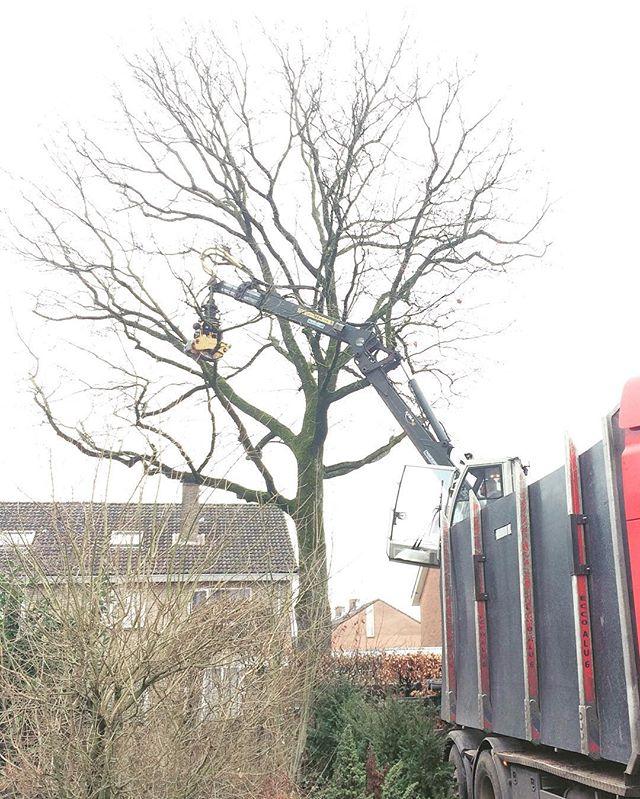 Today we removed this oak tree! 🌳 #boomverzorging #bosbouw #losser #forestry #treeremoval #arborist #baumpflege #baumfällen