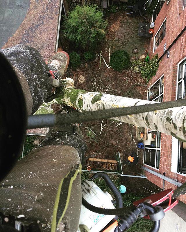 Vandaag een functie op hoogte in de binnenstad van #enschede 🌲😃 #boomverzorging #bomen #bosbouw #baumpflege #baumfällung #arborist