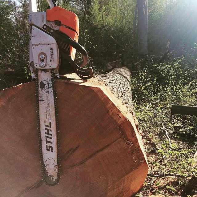 Nice quality oak at Bad Bentheim Germany, ready for the sawmill! ⚒ . . . #holz #baumpflege #forst #forstbetrieb #badbentheim #stihl #forstwirtschaft #baumfällen #tree #wood #treefall #logg #treeremoval #forestry #lumberjack #logging #bosbouw