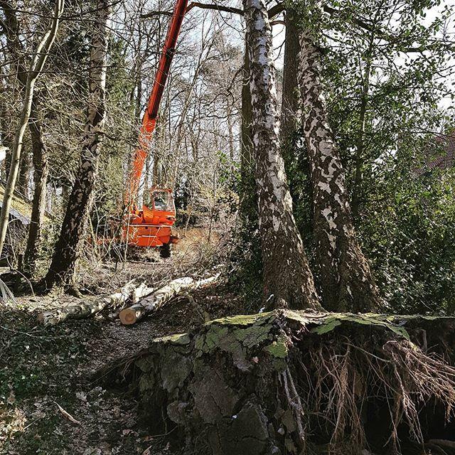 An insight of last week work! . . . #treefall #treefalling #arborist #boomverzorging #bosbouw #forst #baumfällung #logging #baumpflege #holz #stihl #lumberjack #forstwirtschaft #tree #wood #forestry #treeremoval #baum #landgoed #husqvarna #logs #zagen #treecutting #overijssel