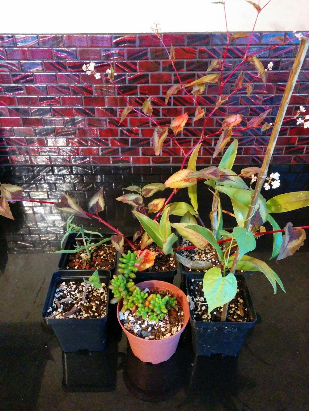 plant sale pic.jpg