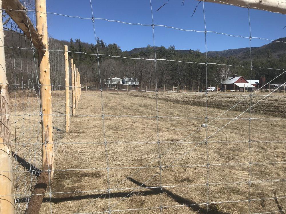 new deer fence