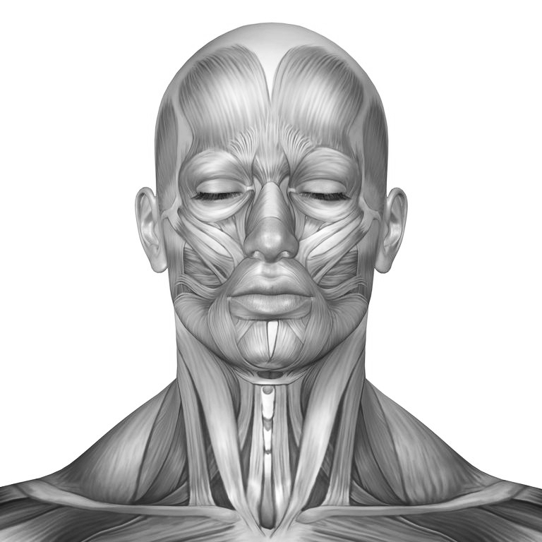 Face Muscle Isometric Toning is a targeted non-surgical facelift through facial muscle training using bodybuilding principles to tone, build and  and lift face muscles working deep below the skin enhancing youthfulness.