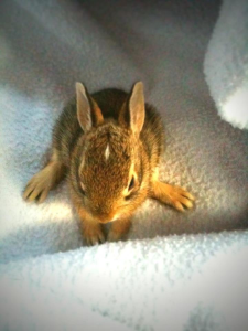 Fine and Feathered Wild Bunny