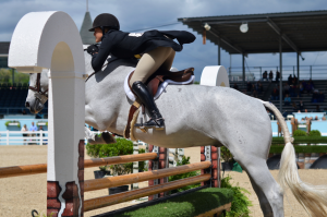 Devon Horse Show on Fine and Feathered