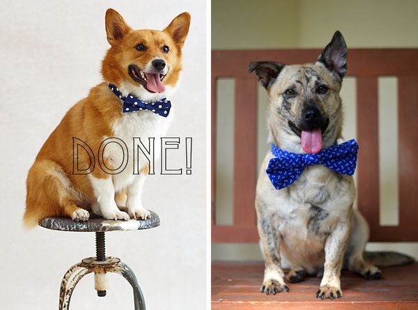 Doggie Bow Tie  via Fine and Feathered