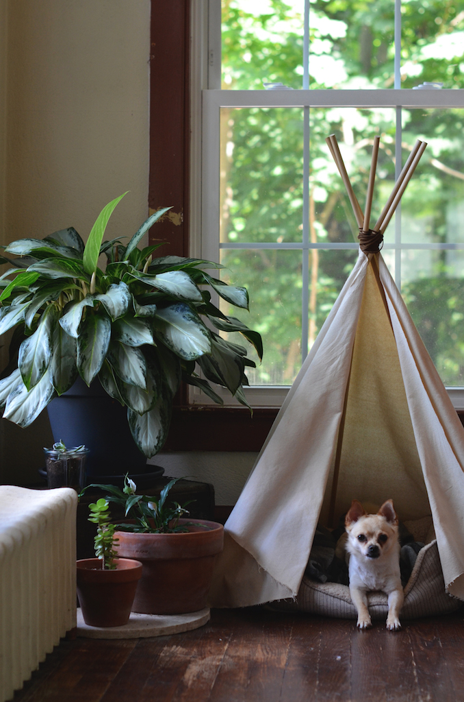 Fine and Feathered - Dog Teepee