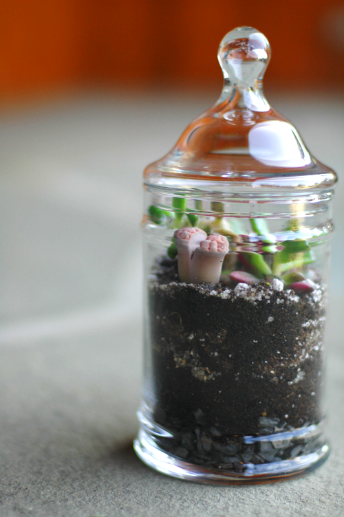 Fine and Feathered - Terrarium DIY